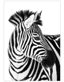 Poster A4 Zebra