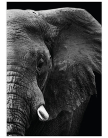 Poster A4 Olifant