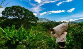 Costa Rica - La Pastora