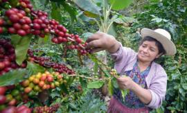 Guatemala - El Chapin