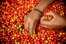 Rwanda - Nyakarenzo