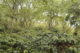 Indonesia - Kerinci Gunung Tujuh