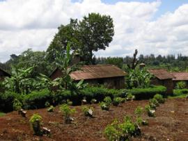 Kenia - Mukima