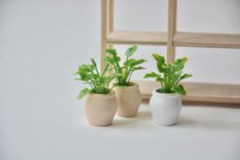 "Plantje in terracotta pot ""nude"""