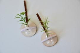 Wandhanger plant