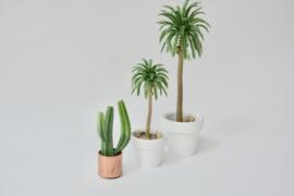 Cactus in koperen pot