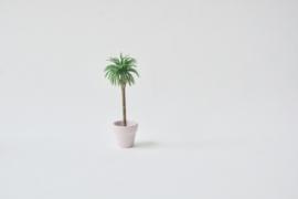 Palm S