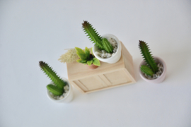 Cactus in pink pot