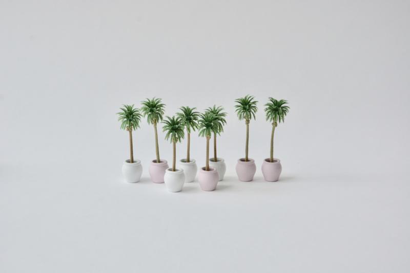 Palm in terracotta potje roze of wit