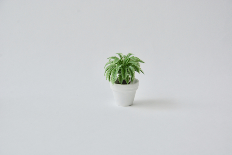 Palm in witte pot