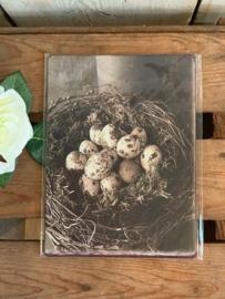 Nostalgisch Bordje 'Wild eggs'