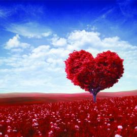 Eigen Liefde