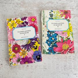 Set Tuinplanten in kleur Moussault