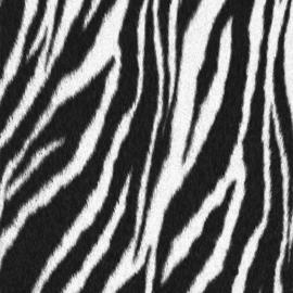 Sock my feet zebra