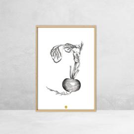Poster Botanische Illustratie - Rode biet