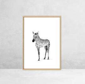 Poster Afrikaanse Dieren -  Illustratie Zebra