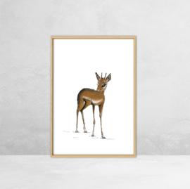 Poster Afrikaanse Dieren -  Illustratie Dik Dik