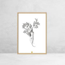 Poster Botanische Illustratie - Wortel