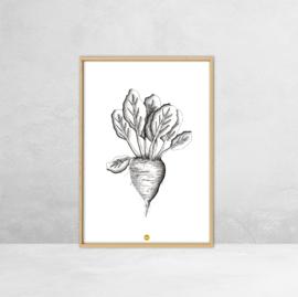 Poster Botanische Illustratie - Suikerbiet