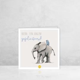 Wenskaart Geboorte Jongen  - Olifant