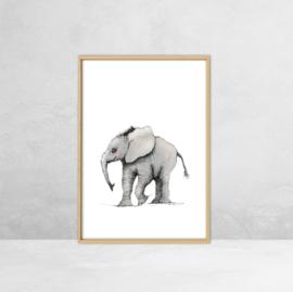 Poster Afrikaanse Dieren -  Illustratie Olifant