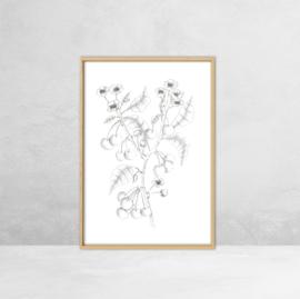 Poster Botanische Illustratie - Kers