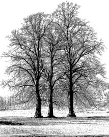 Crafty Individuals CI-453 Tree Trio Unmounted Rubber Stamps