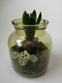 Hyacint in vaasje