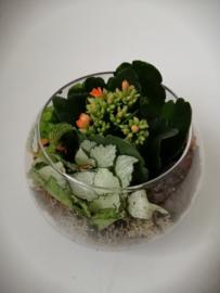 Bolvaasje met plantjes