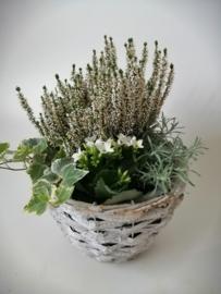 Wit mandje met planten