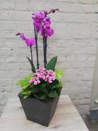 Orchidee  plantencoupe