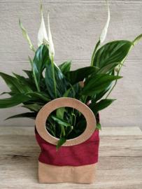 Spathiphyllum in zakje