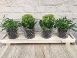 Houten tray met plantjes