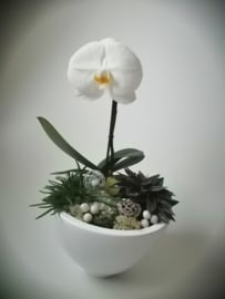 Feestelijke schaal met orchidee