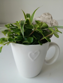 Mok met plantjes