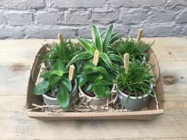 Bedankt - plantenbox