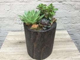 Vetplanten in houten pot