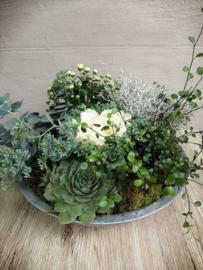 Coupe met buitenplanten
