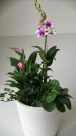 orchideecoupe