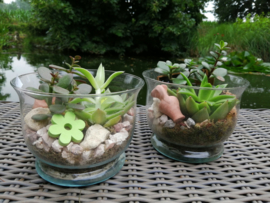 vetplantjes in glaasje