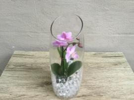 Mini Phaleanopsis in vaasje