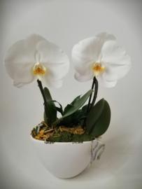 Coupe met 1-bloemige orchidee