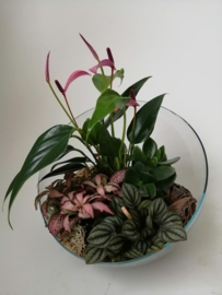Glasschaal met plantjes