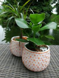 Fleurige plantjes 2st