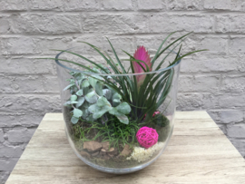Vaas met plantjes