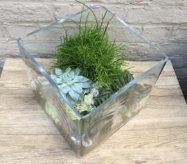 Vaas met planten