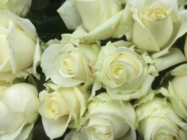 Witte rozen 10 stuks