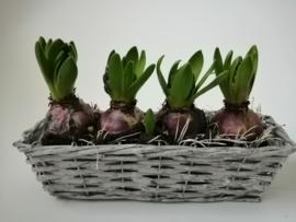 Mandje met hyacinten
