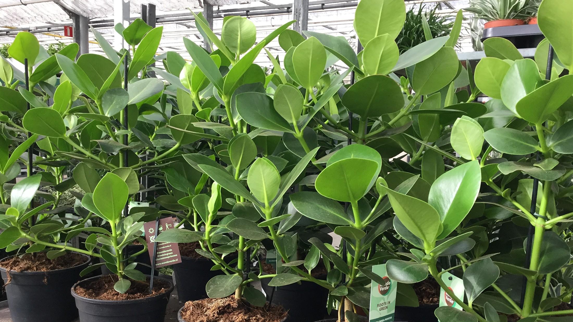 Bloemen en planten voor bedrijven
