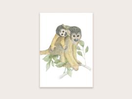 Ansichtkaart apen